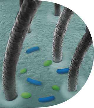 Desequilíbrio Microbioma