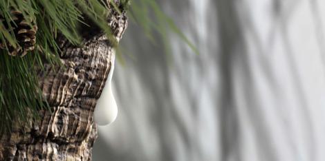 O que pode trazer da natureza para a sua rotina de beleza