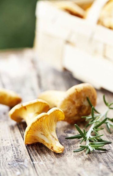 Salad-days-how-mushrooms-keep-our-skin-looking-young